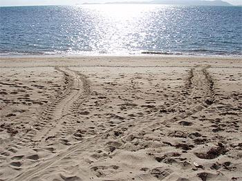 turtle-tracksW